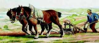 Das Burgdorferpferd